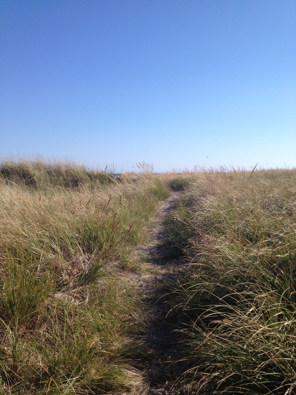 Breathing in the warm spiciness of sun soaked sand, grass and sea air in the dunes