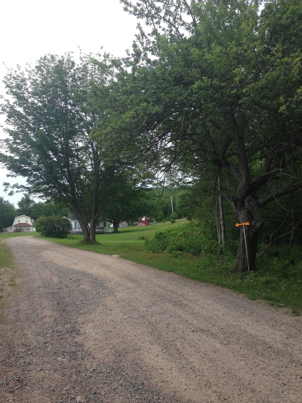 The road to my family's property in Ingonish.