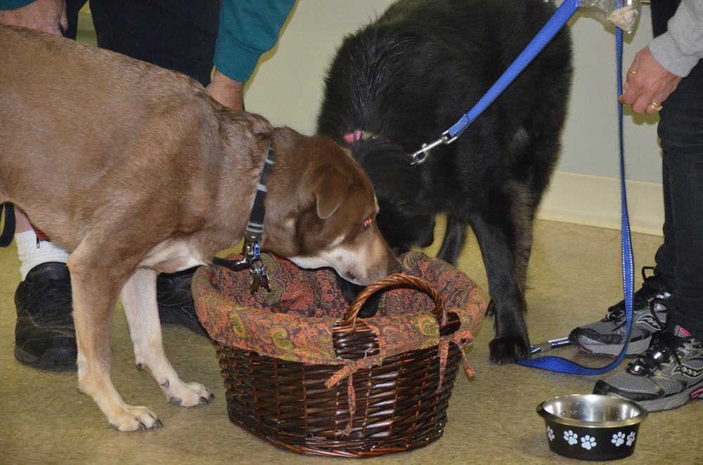 Hutch and Lacey learn to put away their toys during a Tidy Up Workshop at MJ's Pet Training Academy