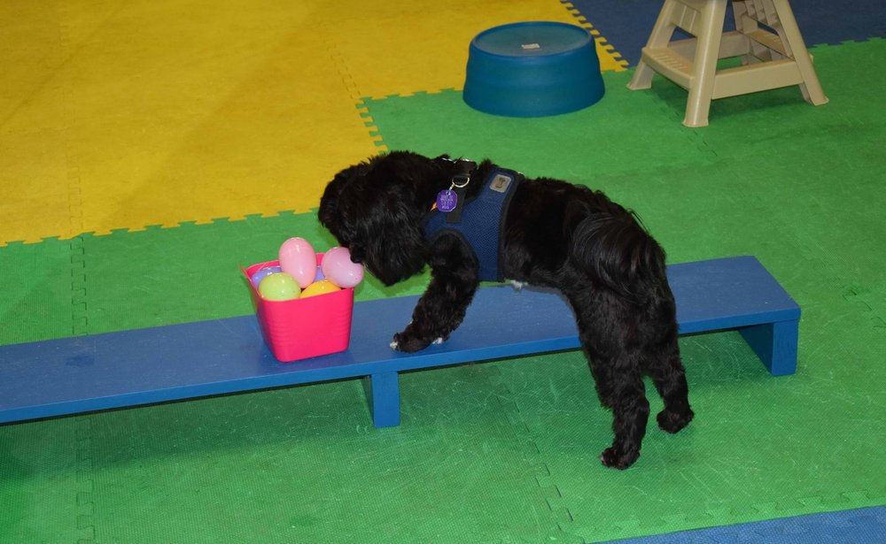 Dartmouth dog training, New Bedford dog training, Acushnet dog training, Fairhaven dog training