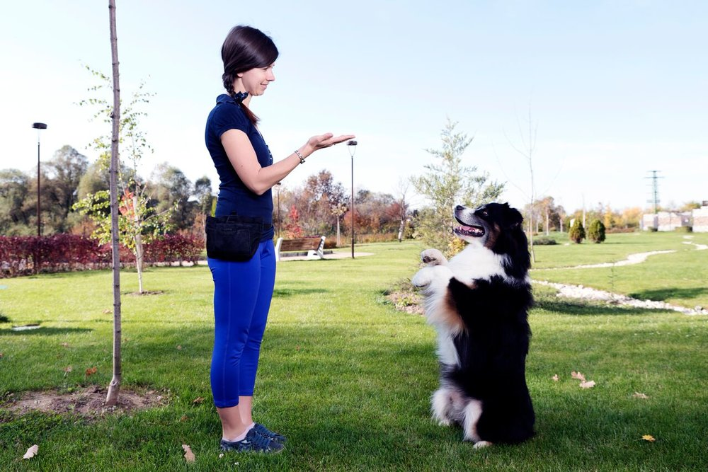 Skills Courses for Dogs and Puppies