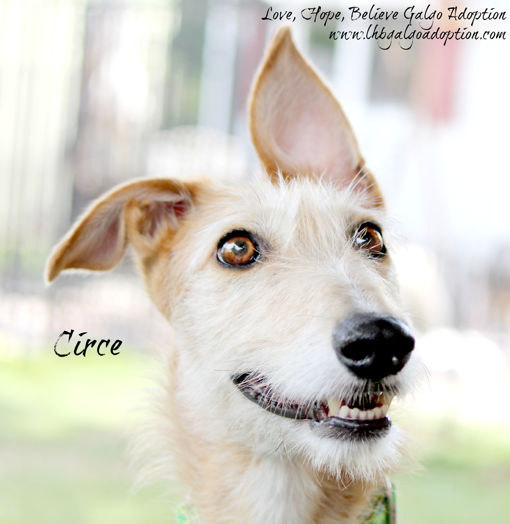 Circe-8102014-Lrg.jpg
