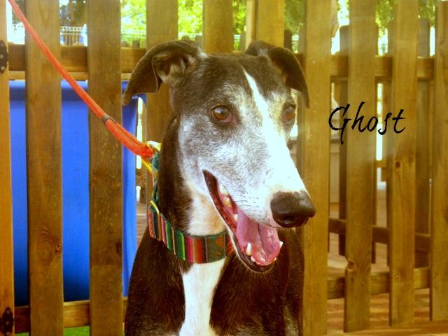 Ghost-FBM.jpg