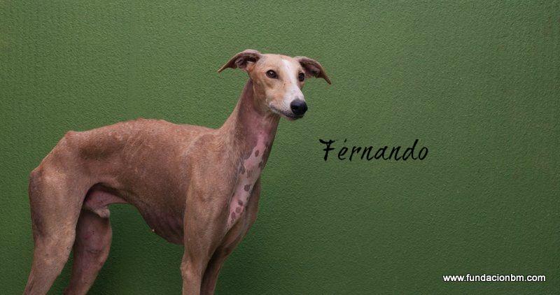 Fernando-LHB-WP.jpg