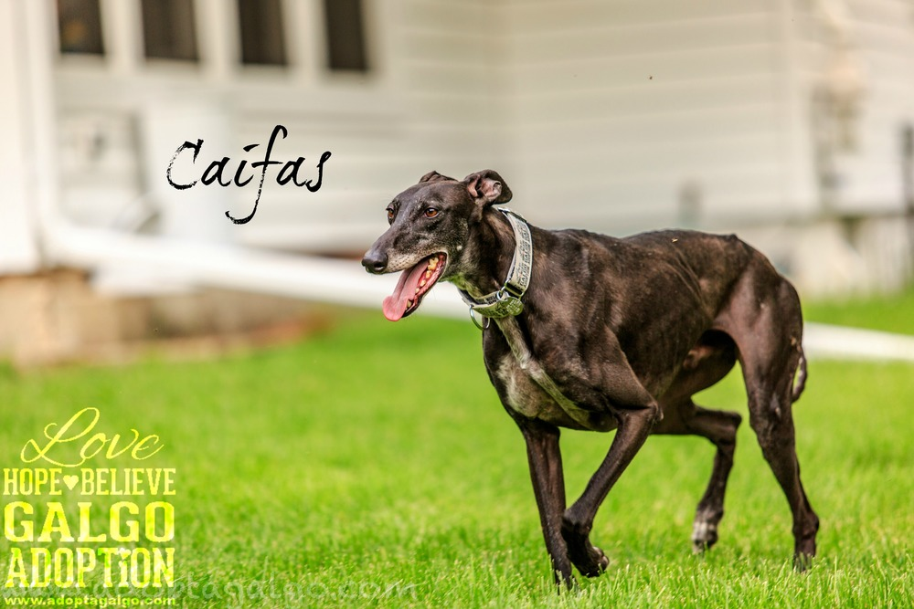 Caifas-5905.jpg