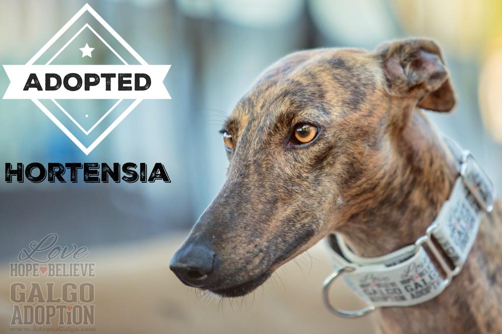 LHBGA-Hortensia-Adopted.jpg