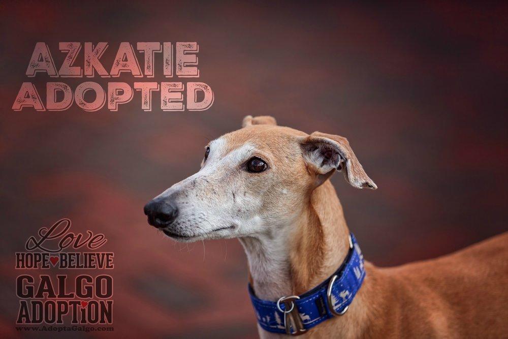 Azkatie-LHBGA.Adopted.jpg