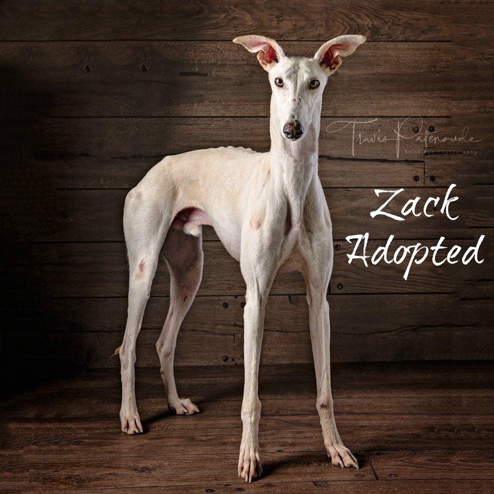 Zack-Adopted.jpg
