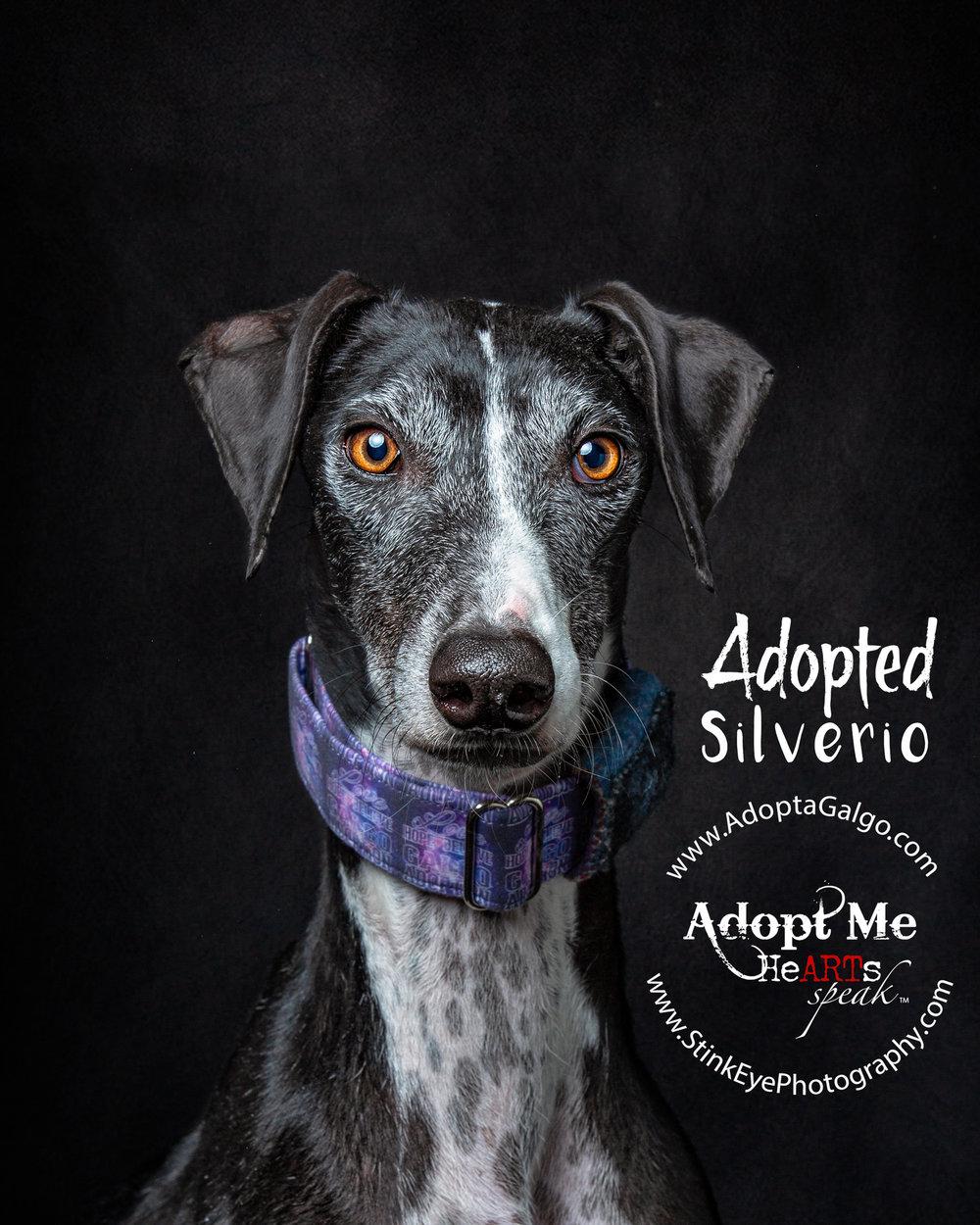 Silverio..Adopted.jpg