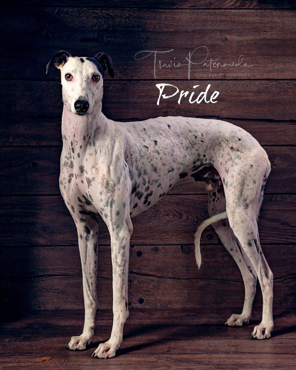 LHB-Pride.web.jpg