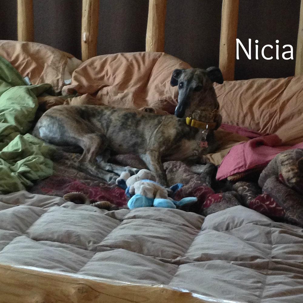 Nicia.Adopted.jpg