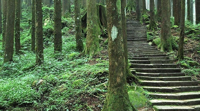 800px-Alishan_Forest_Staircase2.JPG