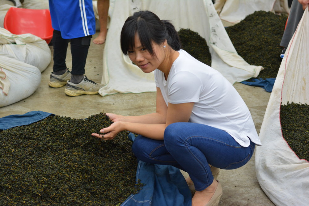 This batch of leaves is fresh off the mountain and in the first stage of processing. Darker teas in the Oolong and Black categories require around 10 cycles of withering, rolling, and oxidation to achieve their specific taste profiles.