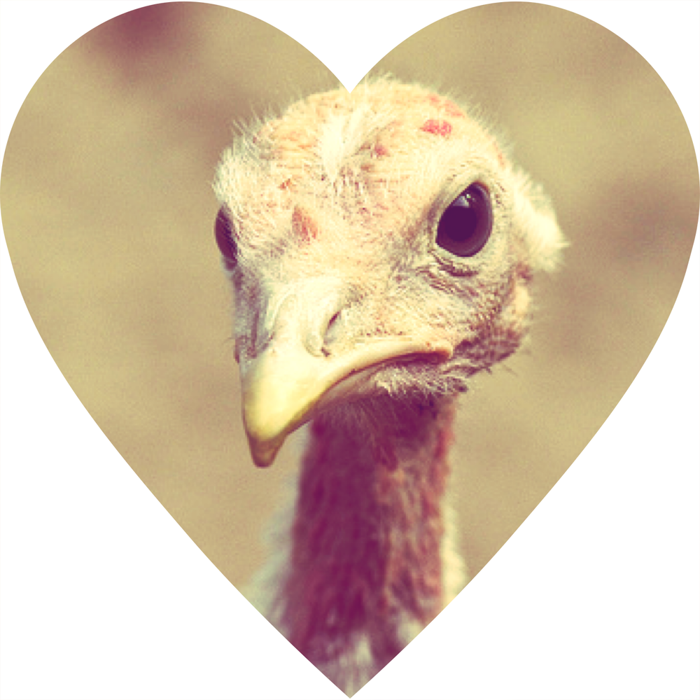 turkey heart.png