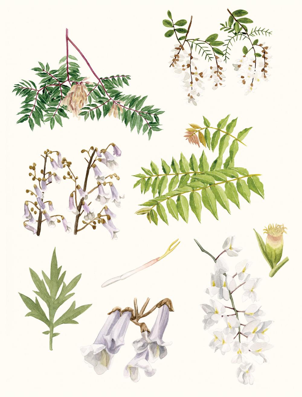 2-plants.jpg