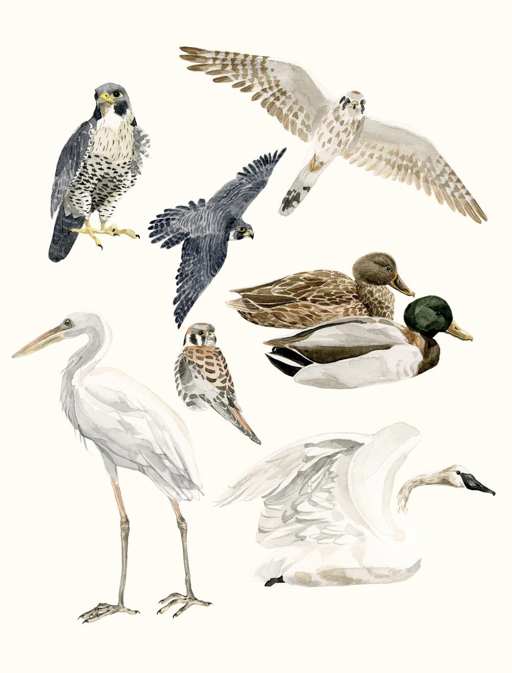 3-birds.jpg