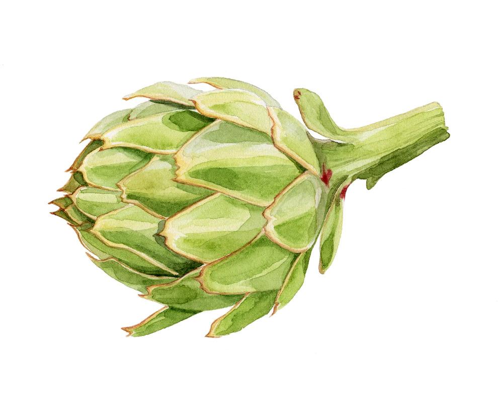 5-artichoke.jpg