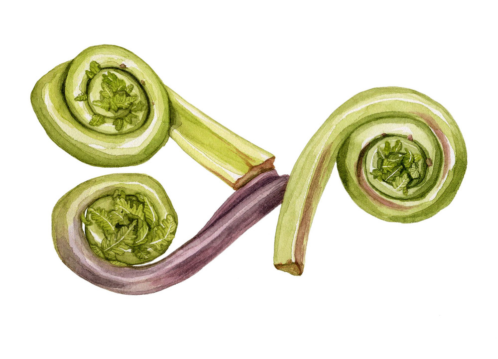 19-fiddleheads.jpg