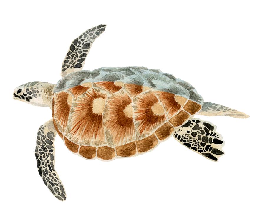 1-10-turtle-sm.jpg
