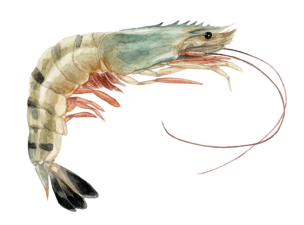 2-2-shrimp-sm.jpg