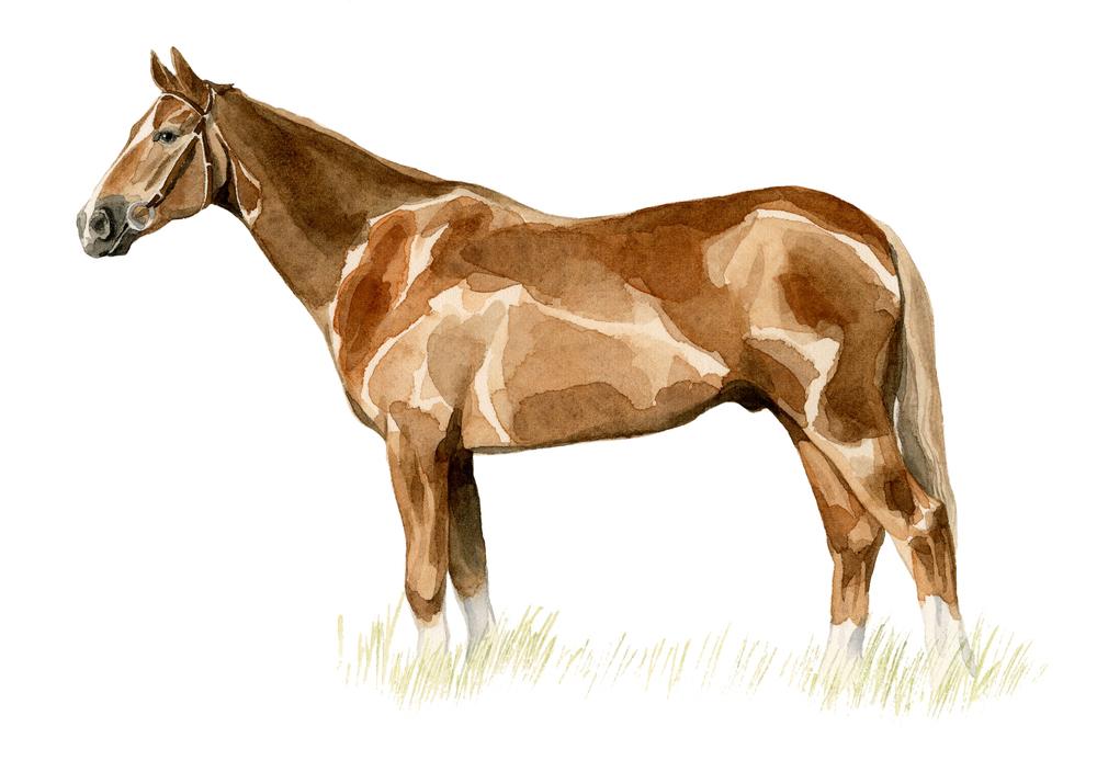 horse-lrg.jpg