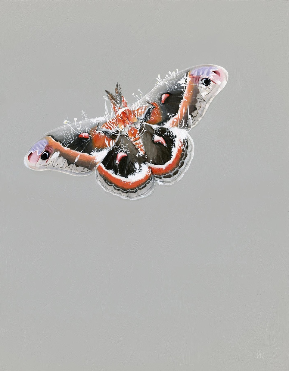 "@Melinda Josie, 'Cecropia Moth', 2013; Oil on Linen, 12"" x 15"" framed"