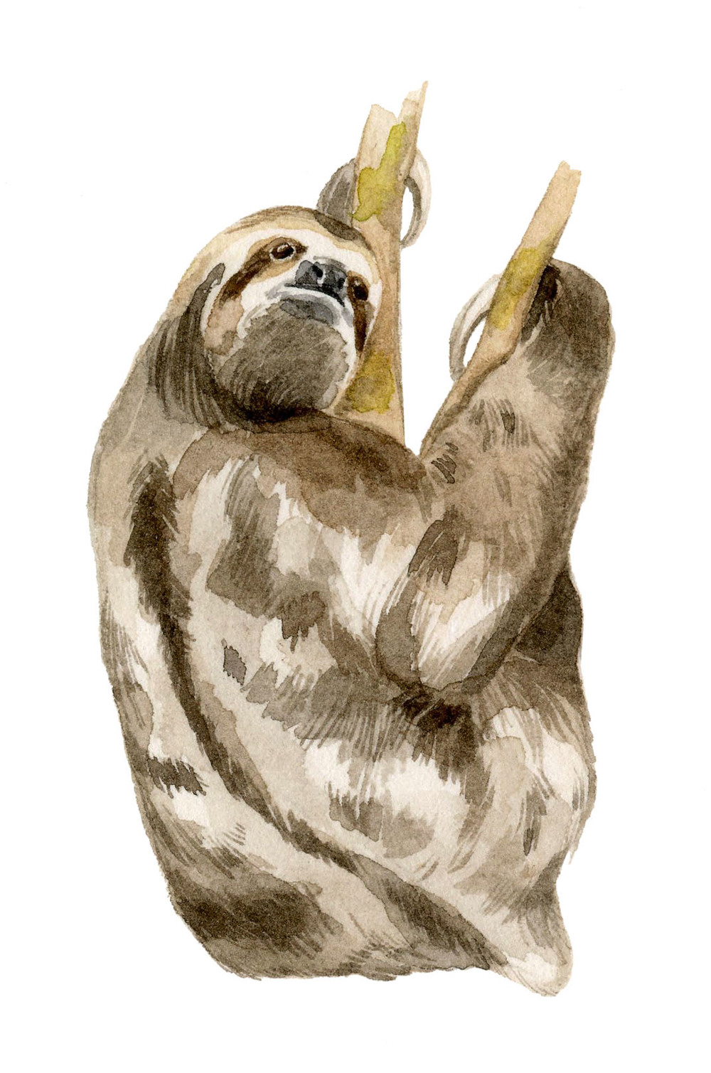 sloth-lrg.jpg