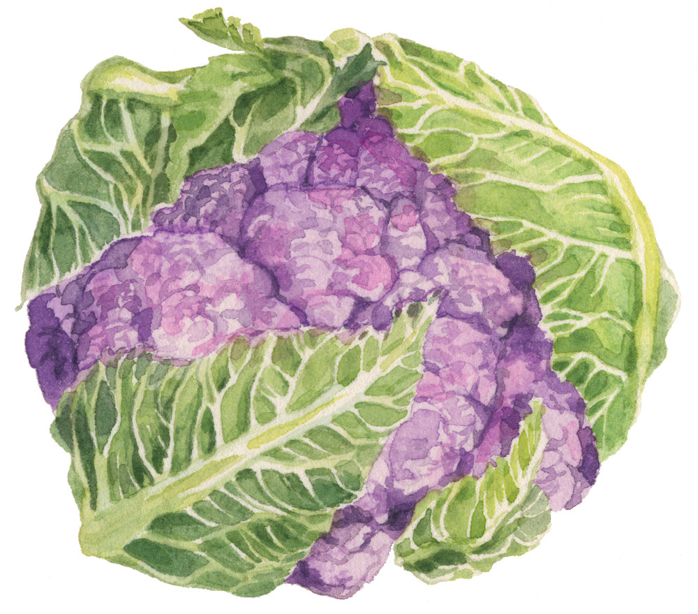 16-cauliflower-lrg.jpg
