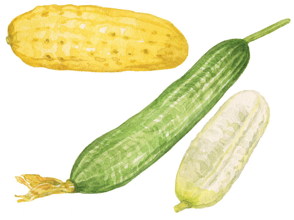 17-cucumbers-lrg.jpg