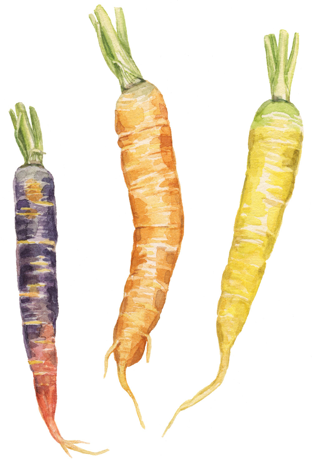 27-late-carrots-lrg.jpg