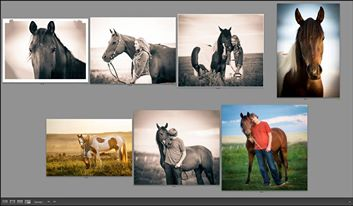 Favorite pics from the horse photo shoot