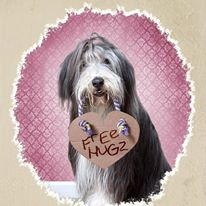 bearded_collie_valentine_card