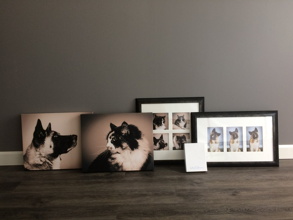 denver pet photographer fine art cats & dogs