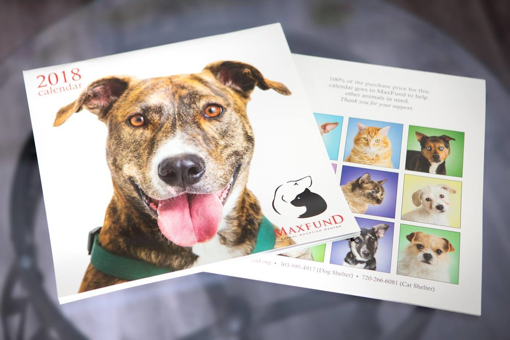 maxfund-animal-shelter-calendar-dog-photography-denver.jpg