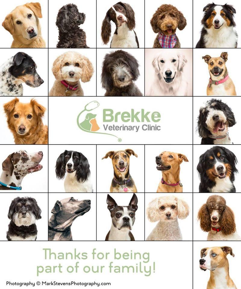 brekke dog portraits castle pines.jpg