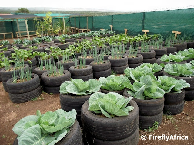 what do you think of the idea of bringing back ofy do you have a backyard farmgarden what have you planted in it and how are you maintaining it