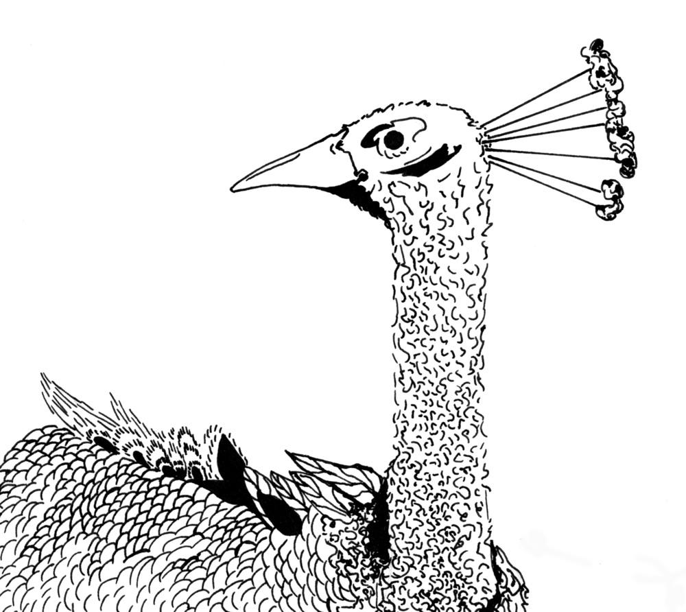 peacock bitmap.jpg