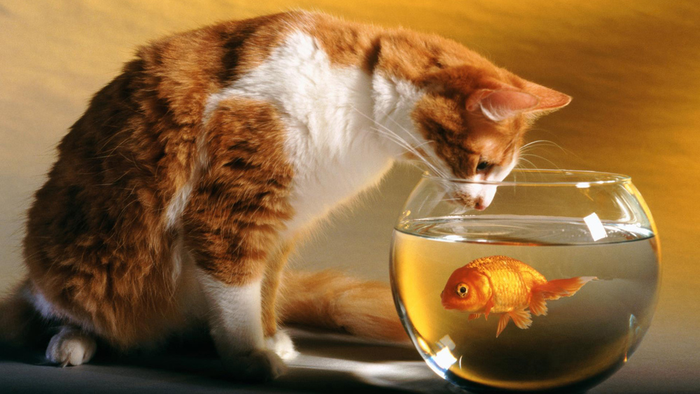 cat_and_fish-HD.jpg