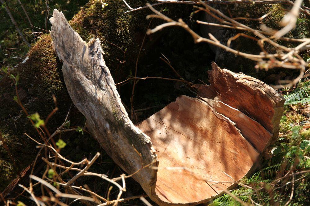 Tree Husk