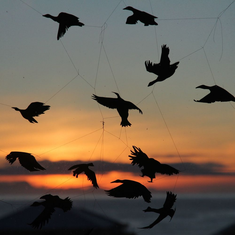 Ashley Lamb's Birds silhouetted against the sunset