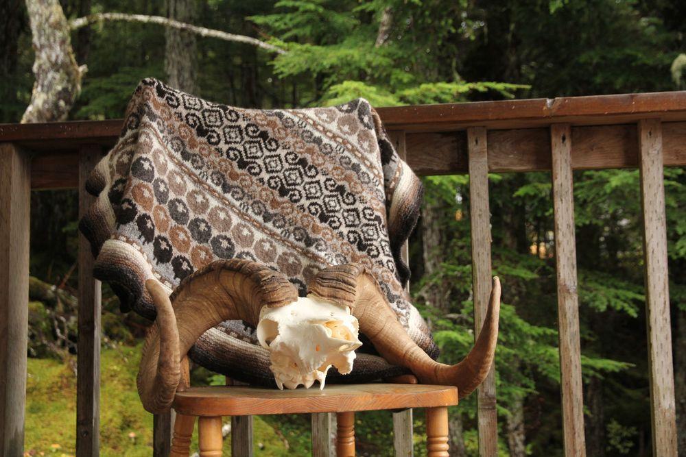 rams and yowes-sheep hunting-alaska-woolen travels.jpg