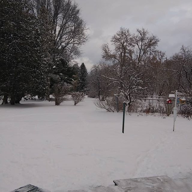Fresh Christmas snow. Merry Christmas #Christmas#schoharie