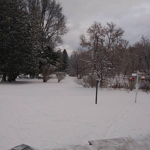 Fresh Christmas snow. Merry Christmas #Christmas#schoharie