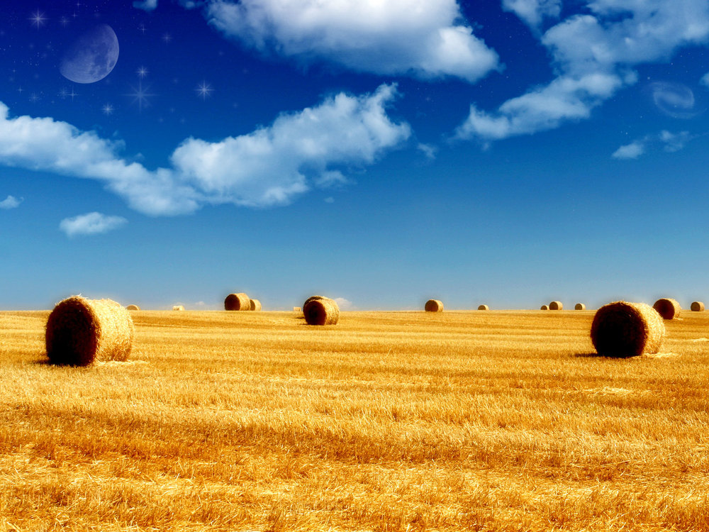 harvested field.jpg