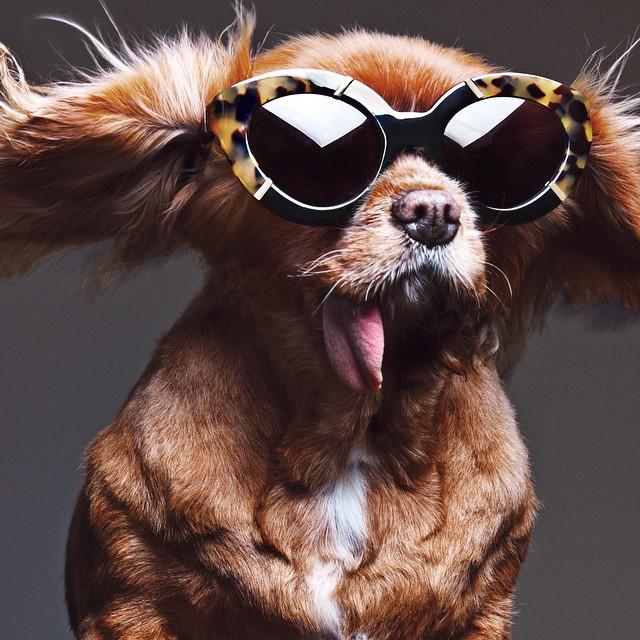 Pupil promujący okulary/Instagram: @toastmeetsworld