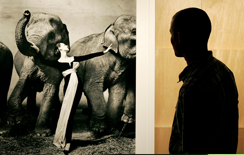 Dovima i słonie w obiektywie Richarda Avedona/fot. Agencja FORUM