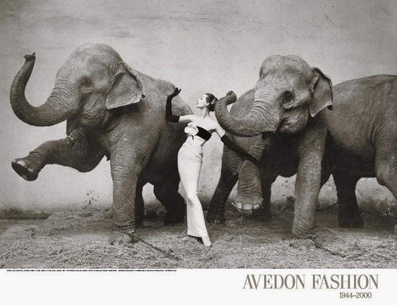 Dovima i słonie/fot. Richard Avedon