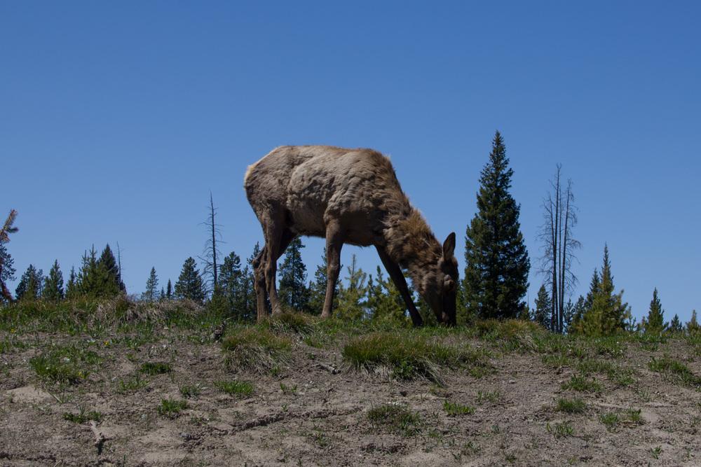 Elk end
