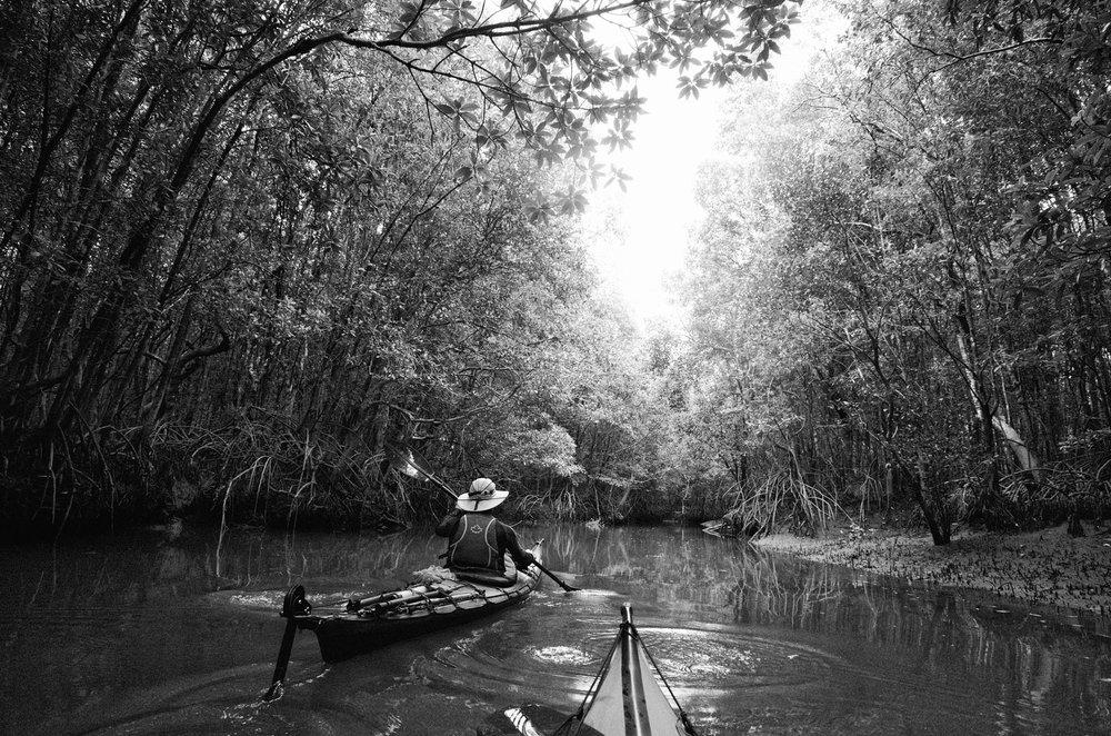 Kayaking Ranong Mangroves