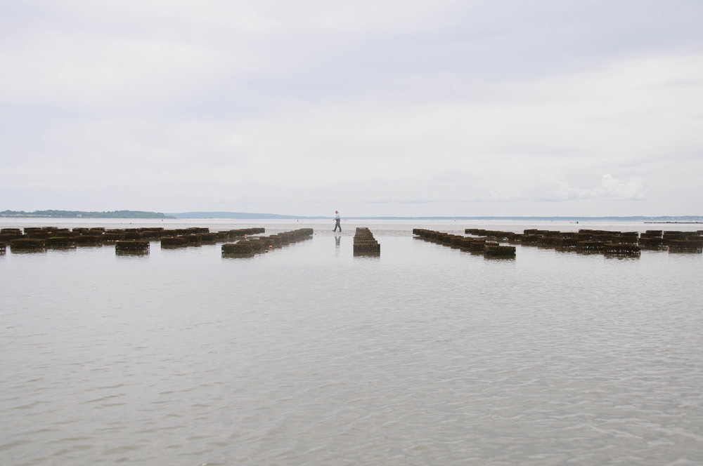 Island Creek Oyster Farm Story by Mandi Tompkins